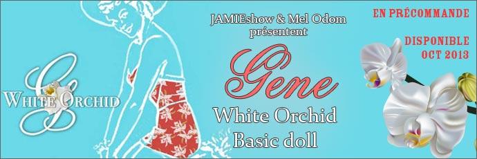 Gene White Orchid
